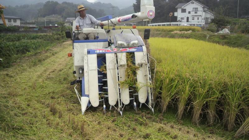 今年の稲刈り